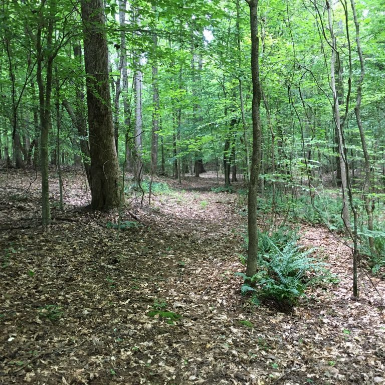 Nature Trail_1
