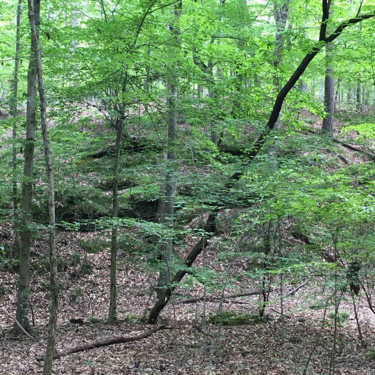 Nature Trail_2