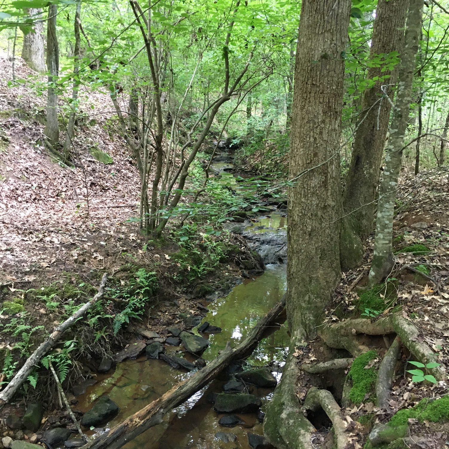 Nature Trail_3