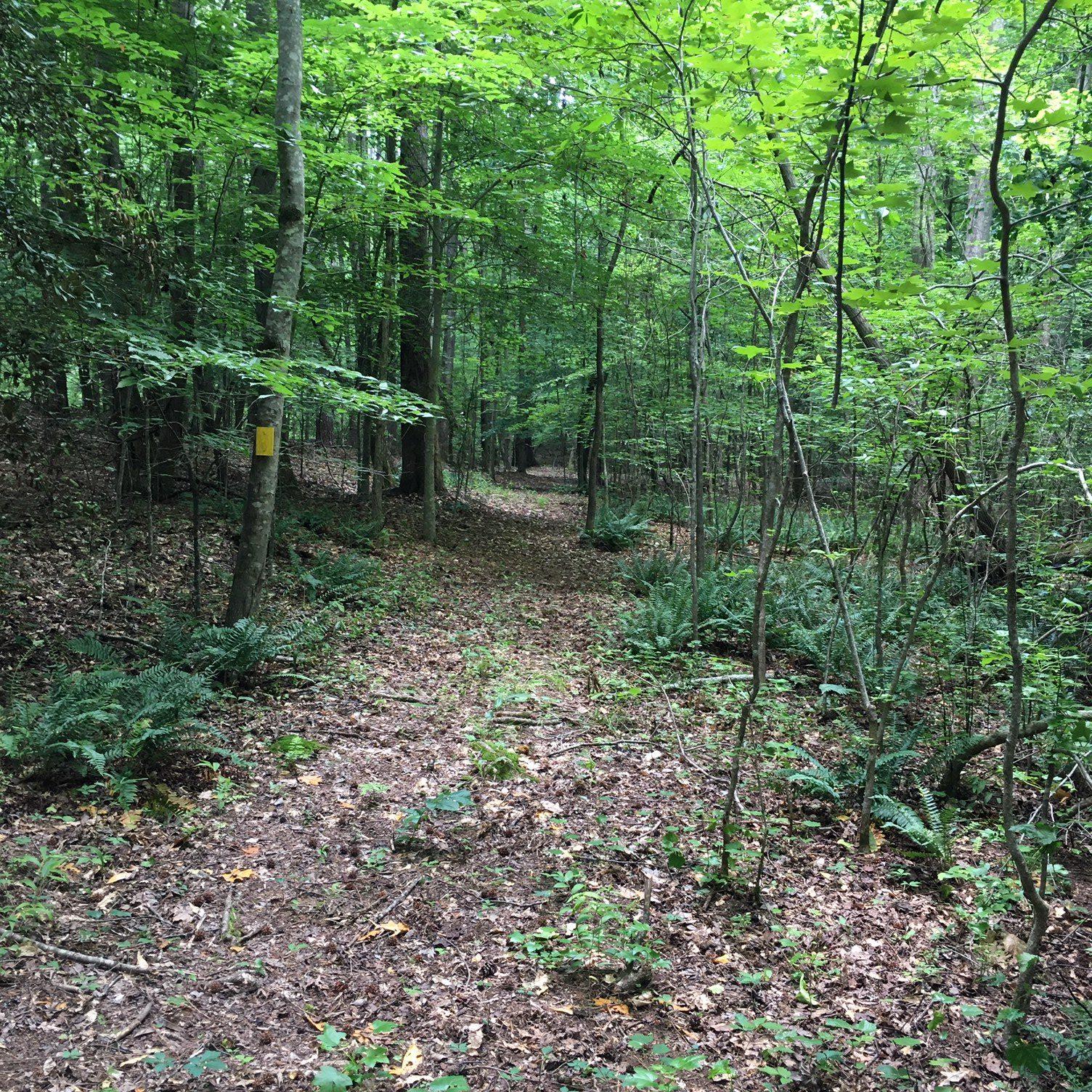 Nature Trail_4